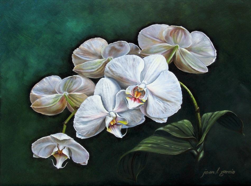 Orlando florist orchid plant phalaenopsis