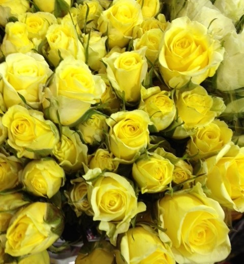 Orlando Florist spray roses yellow