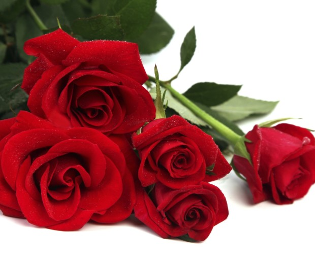 Bay Hill Florist Orlando Valentine's Day