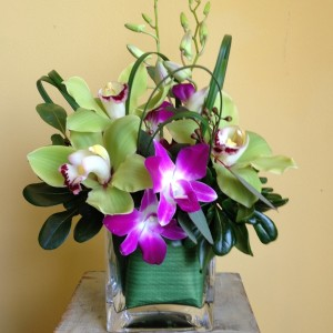 Orchid Fever
